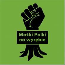 Matki Polki na wyrębie
